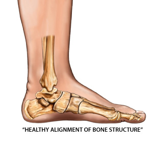 healthy foot alignment & foot bone structure